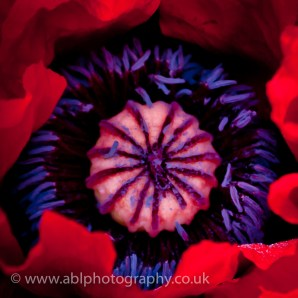 flowers by ABL Photography-3