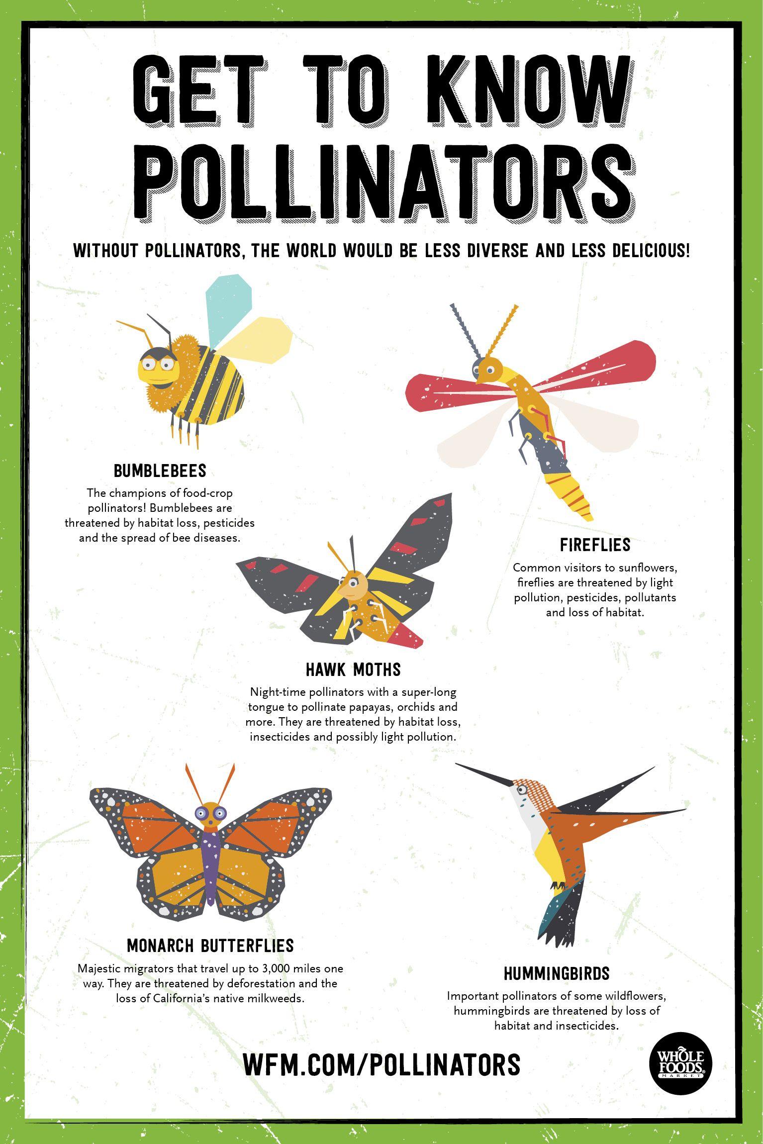 National Pollinator Week Is June 17 23