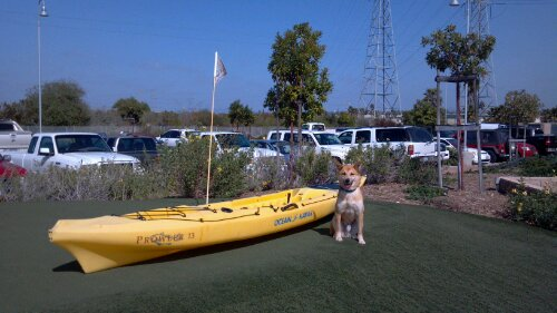 Koku hanging out with a kayak on the putting green