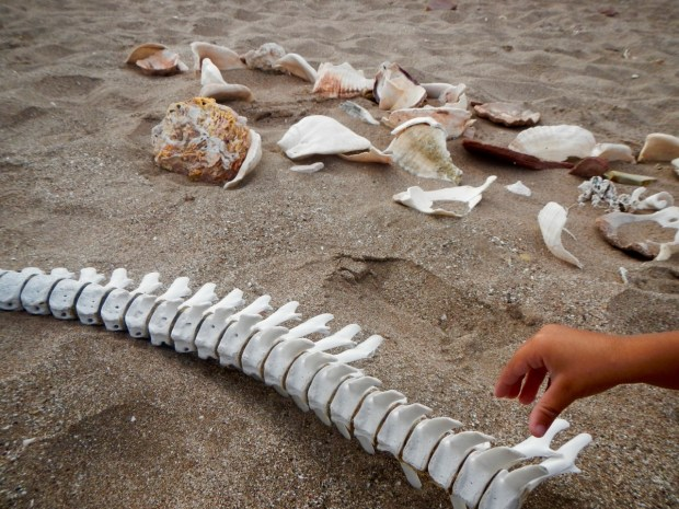 Whale bones and sea shells