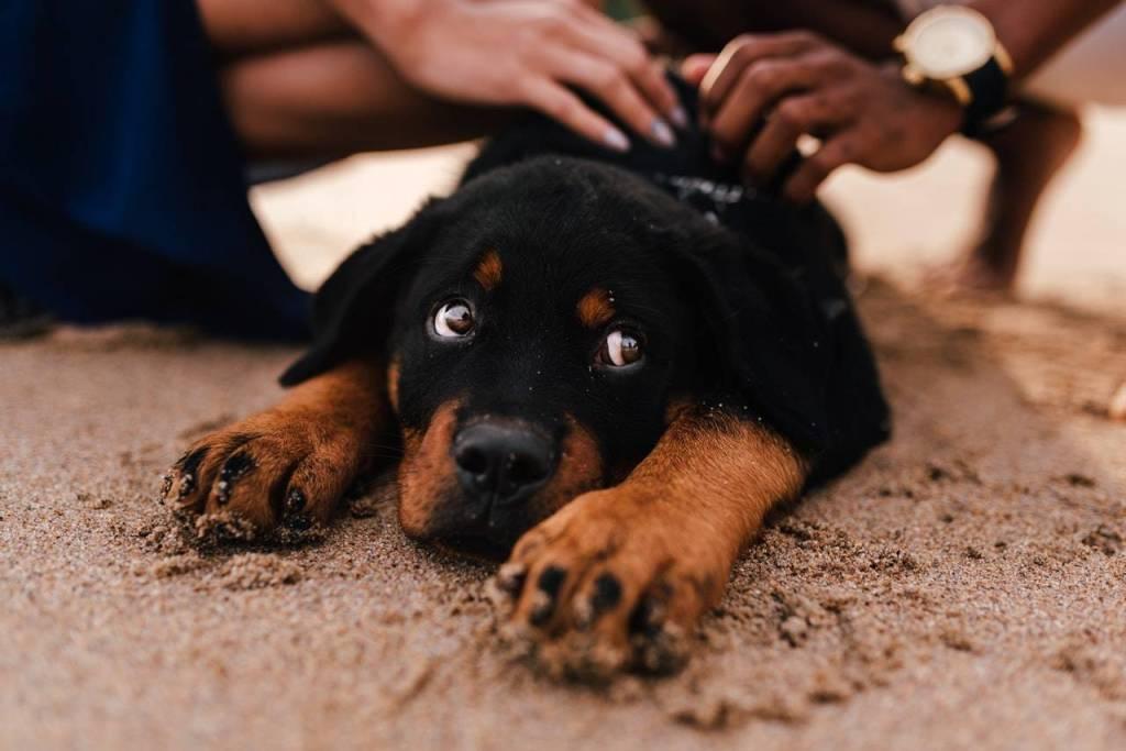 Contratar a un abogado especialista en maltrato animal
