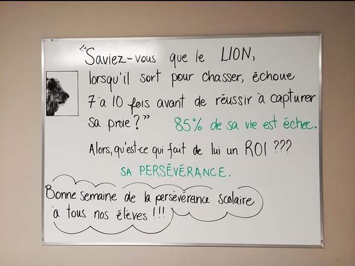 lion persévérance