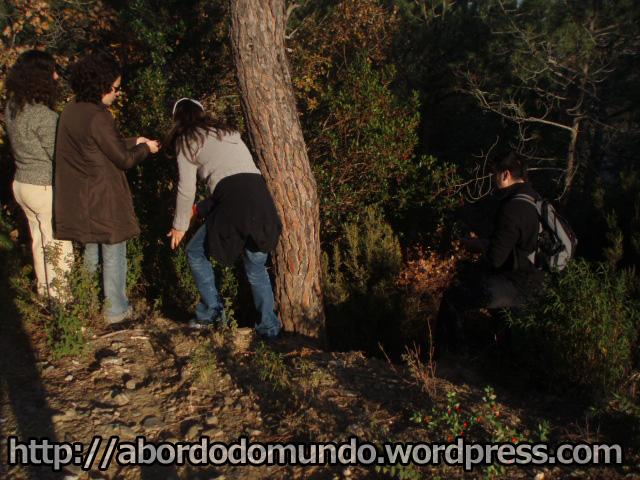 Caminhadas pela floresta