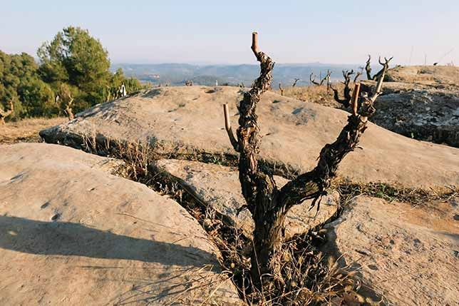 Professional tour of wineries in Catalonia and Spain