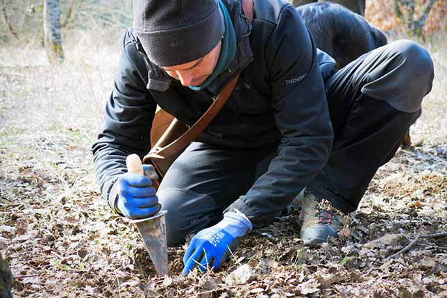 Truffle hunting tours and activities
