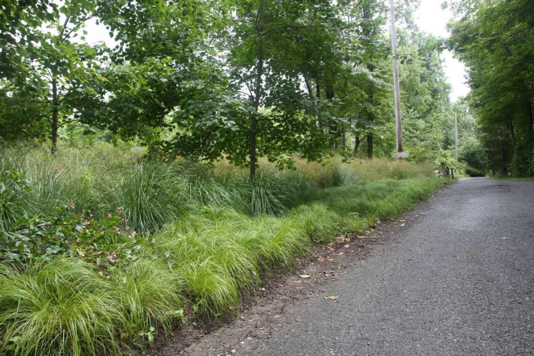Meadow Street in Amherst MA - Landscape Design - road