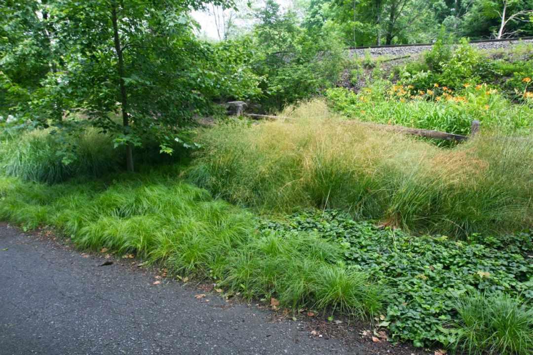 Meadow Street in Amherst MA - Landscape Design - hedge