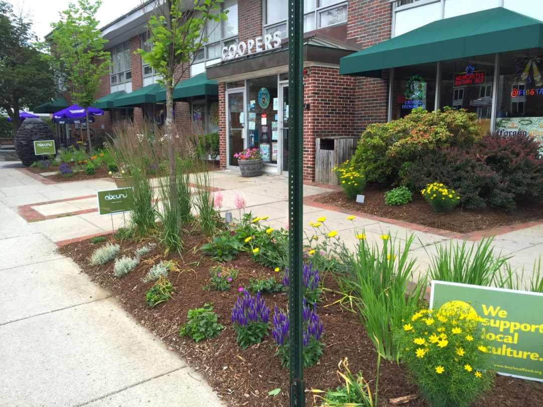 Cooper's Corner - landscape Design Northampton MA - Native Plants