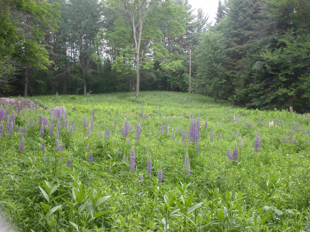 Landscape Design at the Frost Place in Franconia, NH- field