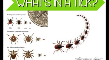 What's In a Tick?