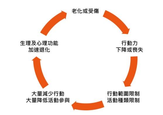 老化受傷循環A