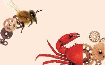 Tense bees and shell shocked crabs