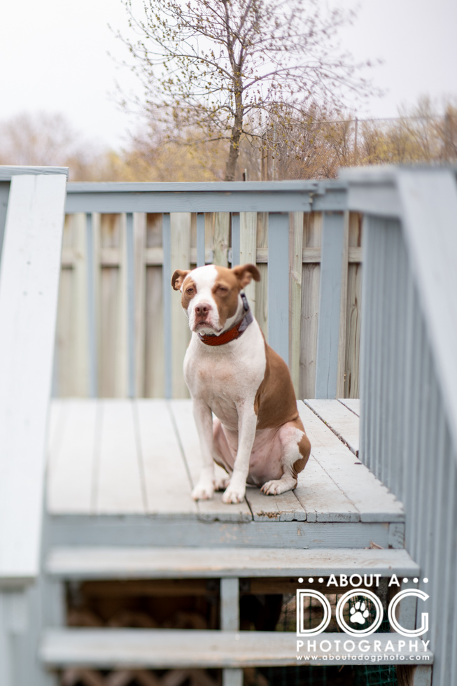 Blog Archives   About A Dog Photography