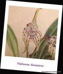 Alphonse Goossens