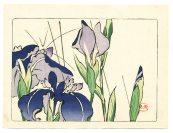 Shibata Zeshin - Hana Kurabe - Iris 1878