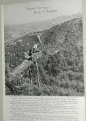 revista-caza-palomas-1949-1
