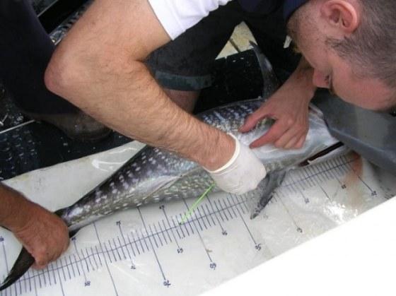 tuna-gipuzkoa-venezuela