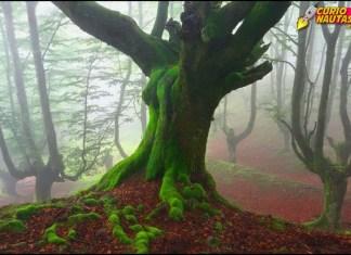 Una imagen de los hayedos del Gorbeia
