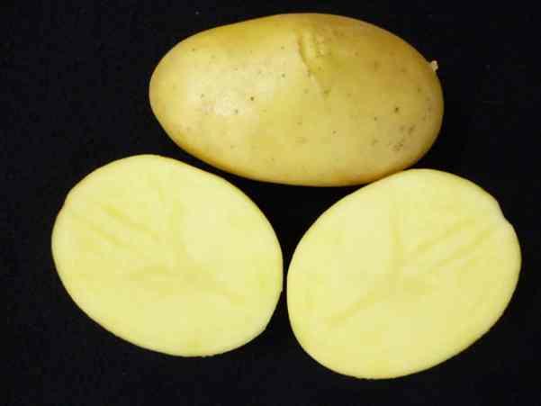 """Variedad de Patata """"Miren"""" creada por el centro de investigación vasco """"Neiker-Tecnalia"""""""