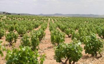 El Prague Post habla de los vinos de Navarra
