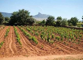 Tim Atkin analiza el enfrentamiento entre bodegeros de la DOC Rioja sobre el futuro de esta Denominación. (Fotografía: Tim Atkin)