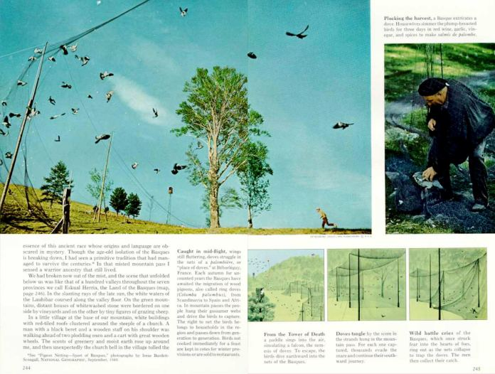 The traditional Basque dove hunt with nets during their migration, covered in an article signed by Robert Laxalt and published in 'National Geographic' in 1968.