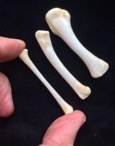 18-07-10 and 24 chicken wing bones uncut