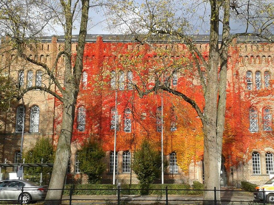 aboutcities_oldenburg_ofener_strasse_herbst