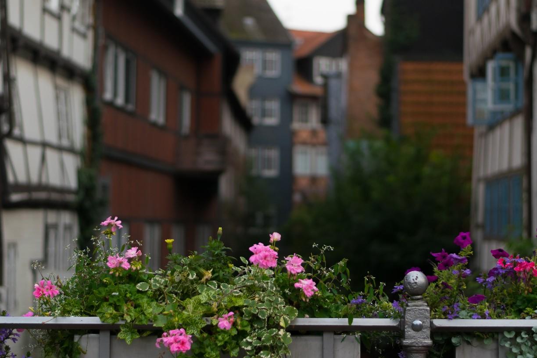 Blumenschmuck vor Klein Venedig