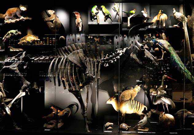 Tiere im Schaumagazin des Naturhistorischen Museums in Braunschweig. Foto: Thomas Ammerpohl