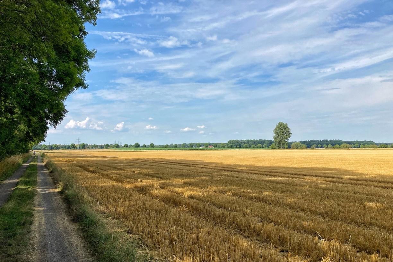 Ein Waldweg am linken Rand des Bildes, der Rest des Bildes zeigt ein gelbes Stoppelfeld sowie ein strahlendblauer Himmel.