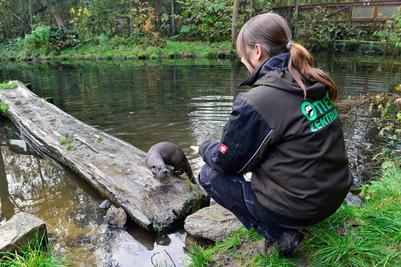 Otter mit Tierpflegerin bei der Fütterung
