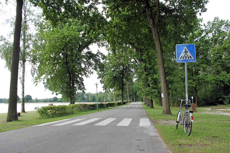 von belaubten Bäumen gesäumter Fahrradweg entlang des Tankumsees