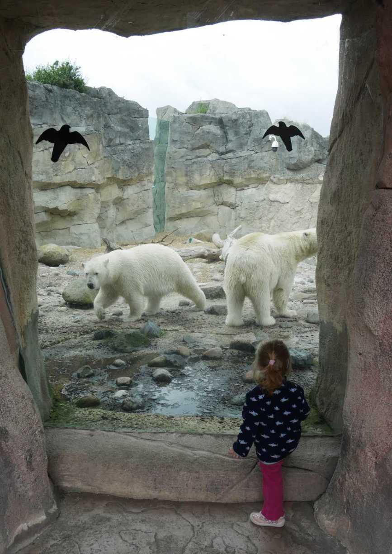 ac bremerhaven zoo eisbären