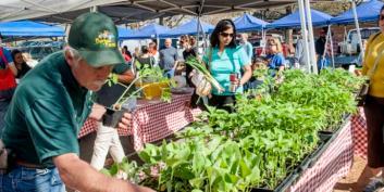 original_davidson-farmers-market0