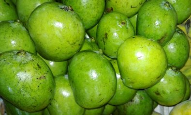Green Indian Mangoes in the Philippines