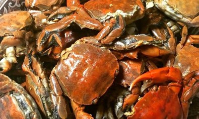 Talangka, very small Philippine crabs