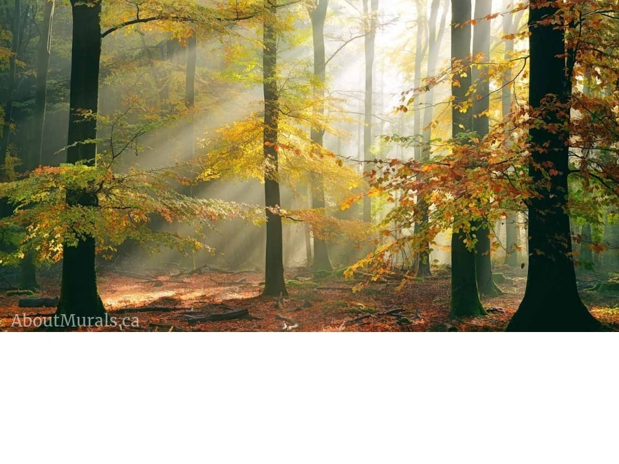 Sinfonia Della Foresta wall mural sold by AboutMurals.ca