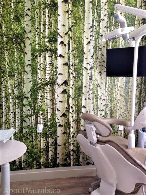 A birch tree wallpaper on the walls of a dentist office. Sold by AboutMurals.ca