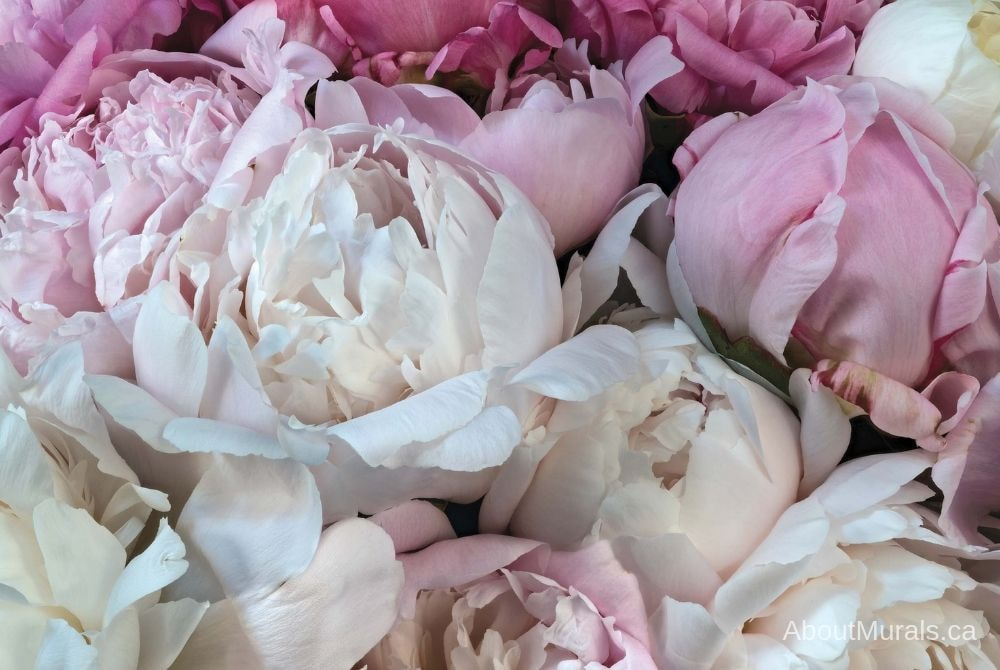 Peony Wallpaper features a high resolution photo of pink flowers printed on removable wallpaper, sold by AboutMurals.ca