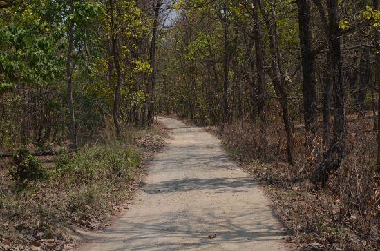 Chitwan forest trail