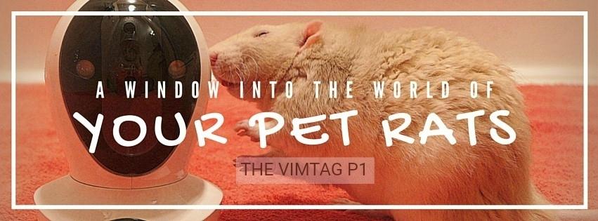 about pet rats, pet rats, pet rat, rats, rat, fancy rats, fancy rat, ratties, rattie, pet rat care, pet rat info, pet rat supplies, pet rat webcam, pet rat video cam, pet rat monitor, Vimtag pet monitor, Vimtag, Vimtag video surveillance camera, Vimtag camera, Vimtag security camera, Vimtag review, Vimtag camera review, Vimtag P1, Vimtag P1 review