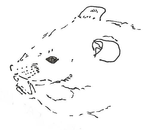 Commercial Diets   About Pet Rats