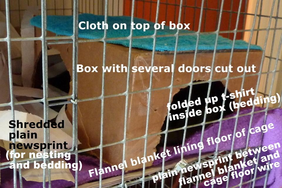 pet rat bedding & litter | about pet rats