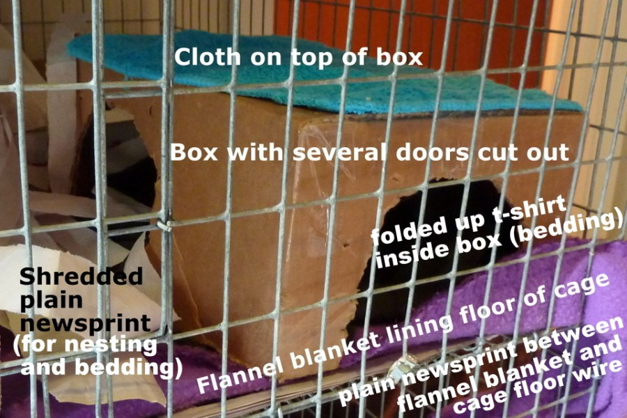 #pet rat bedding #pet rat litter #pet rat litter box training #pet rat care #pet rat cage #rat #rats #aboutpetrats #pet rat #pet rats