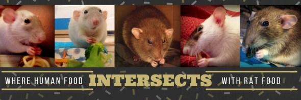 about pet rats, pet rats, pet rat, rats, rat, fancy rats, fancy rat, ratties, rattie, pet rat care, pet rat info, best pet, cute pets, pet rat supplies, pet rat diet, best pet rat diet, best rat diet, pet rat food, pet rat nutrition, pet rat health, pet rat snacks, pet rat snack, pet rat treat, pet rat treats, human food for pet rats, can my pet rat eat human food?