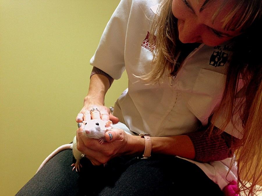 pet rat veterinarian