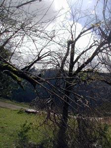 Tree limbs broken from wind