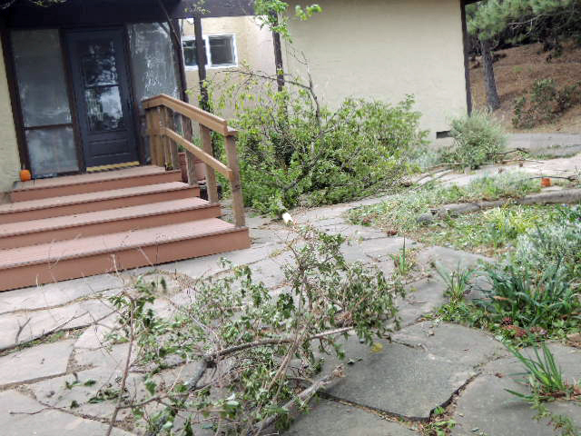 limbs litter the patio