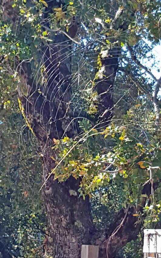 spider web above gate